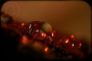 Bokeh Bokeh by ninazdesign