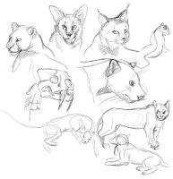 Cats sketch by ksheridan