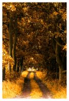 Yellow Path by Riffo