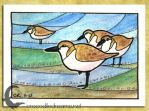 ACEO-ATC: Sanderlings by crocodiledreams
