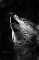 Cry Wolf by W0LLE