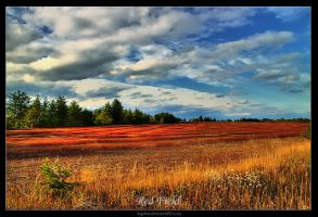 Red Field by Sagittor