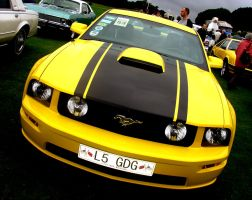 Mustang by lozzy1992