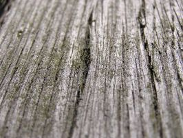 wood 01 by Caltha-stock