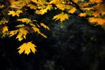 The light in the leaves 2 by lapis-lazuri