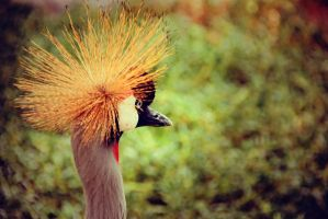 Crown Crane - Edited 3 by lostreality91