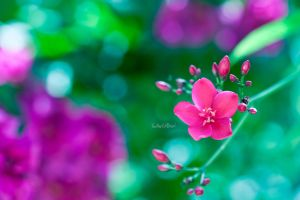 First To Blossom by Saher4ever