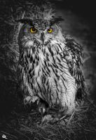 yellow eyes by FraterOrion