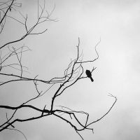 If I can't fly by arayo