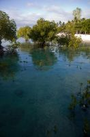 Mangroves by REcreates
