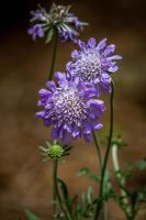 So purple by 904PhotoPhactory