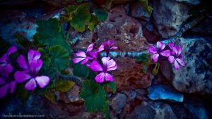 Purple In The Rock by nicolizet