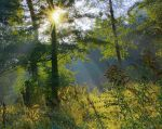 Where the sun shines brightly by starykocur