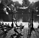 Holga Pigeons 13-108 by Prince-Photography