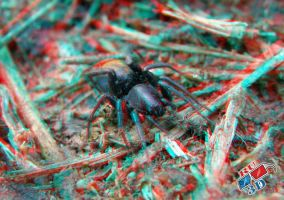 anaglyph spider by redtailhawker