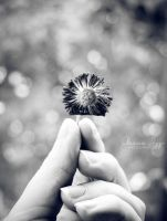 Simple things by Alessia-Izzo