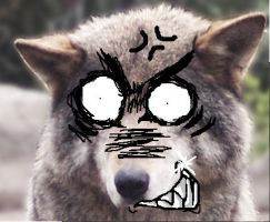 OMG A PISSED OFF WOLF by Japheath