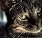 dark side of the cat by KrisSimon