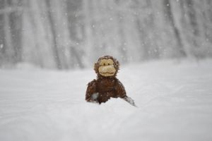 Snow Monkey by ImagineMatt