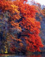 Shades of Autumn 12 by MadGardens
