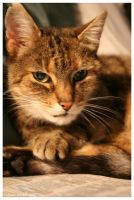 Cats 5 by halogenlampe