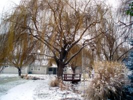 Tree in the snow by JediMichael