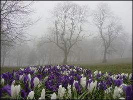 Locke Park in the Mist 23 by squareprismish