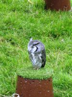 Glamis Castle - Birds of Prey 06 by Narric-SB0