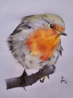 Robin by ManuVacca