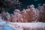 Continuing infrared series by puu4ux