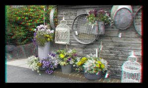flowers at the garden centre by Maysmum
