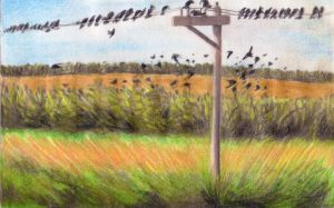 Barn Swallows Perched on a Pole in North Dakota by jesus-at-art