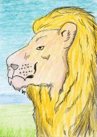 ACEO - Lion by Chri-Tina