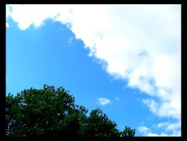 Tree playing with a cloud by nyc0