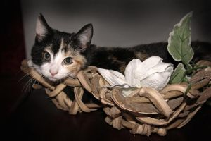 cat in the basket by chevyhax