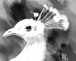 White Peacock Study by Leone-Legender