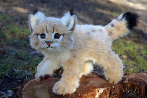 Poseable toy Commission: Bobcats cub by MalinaToys