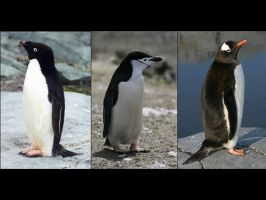 Brush-Tailed Penguins by platypus12