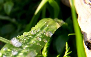 Afternoon dew 1 by CAmpoo691