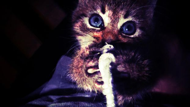 My cat by Chippia