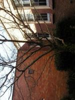 Courtyard Tree by saabe