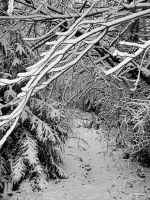 tree branch winter wonderland by DarrenRyan