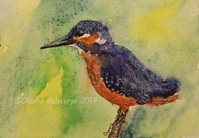 Watercolor and Ink #3 -  Kingfisher by Oksana007