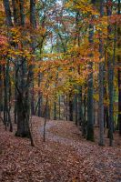 Fall Path by WeaselTea