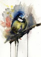 Blue tit by sarahstokes