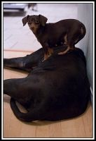 """Dog's -""""Nemo"""" by TINTPhotography"""