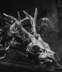 Bone and smoke by AdrianBukowski