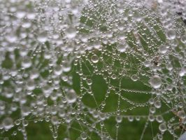 Spiderweb by SwingyTheWeird
