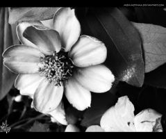 Black and White Flower by mon-mothma
