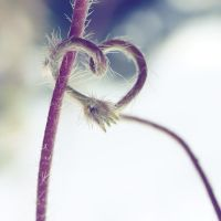 ...naturally with heart by FeliDae84